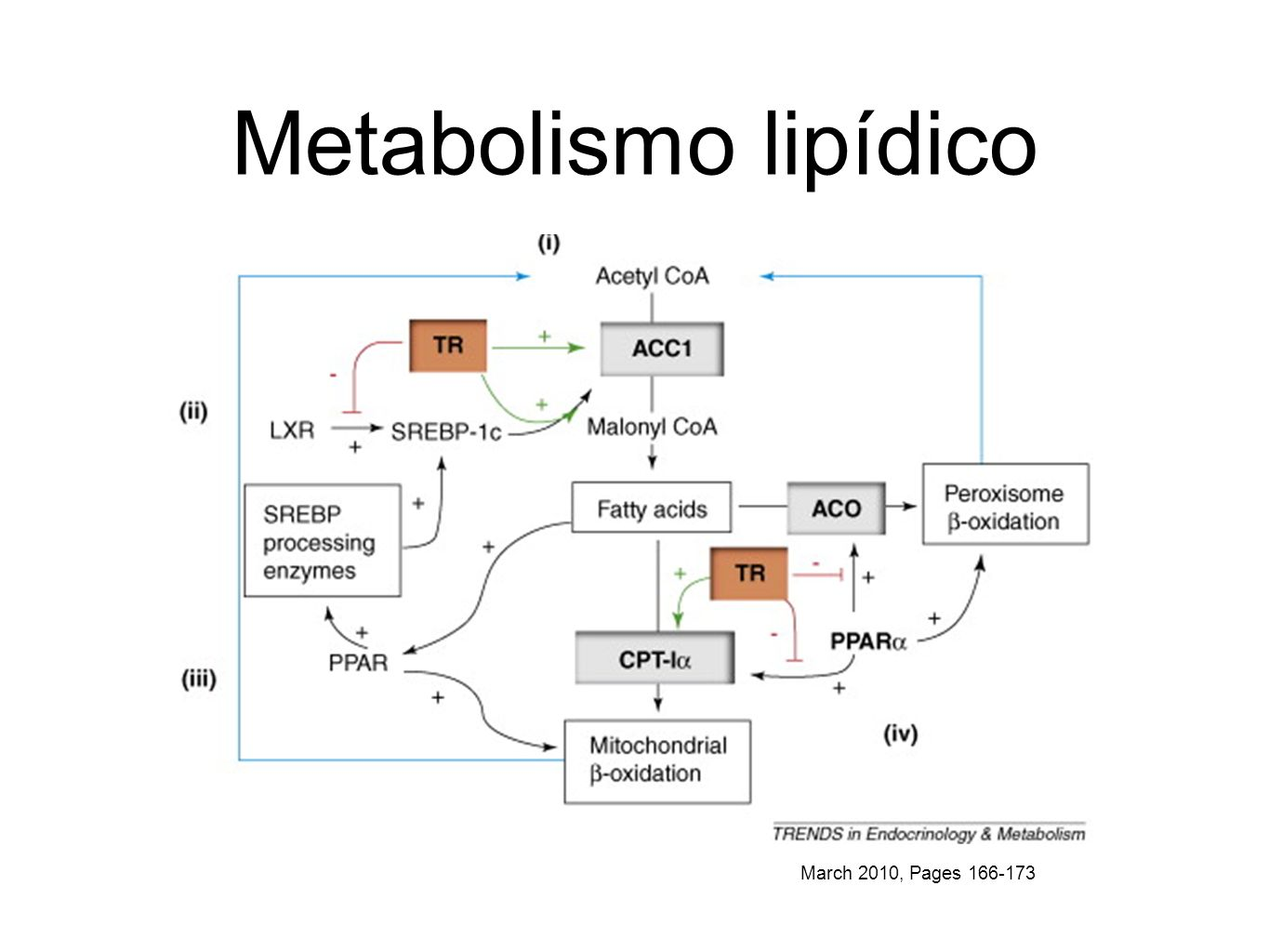 Metabolismo lipídico March 2010, Pages