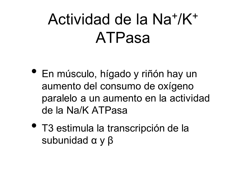 Actividad de la Na+/K+ ATPasa