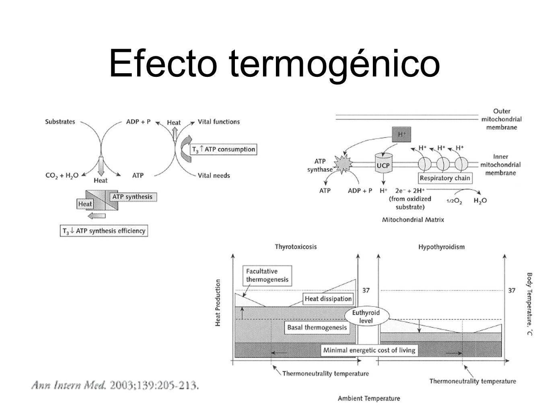Efecto termogénico