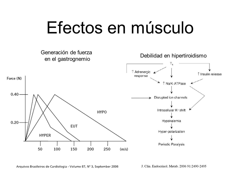 Debilidad en hipertiroidismo