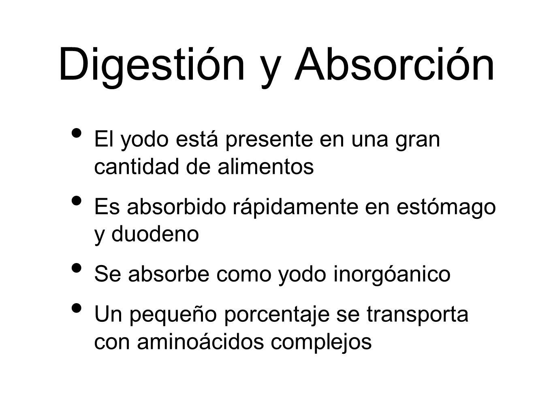 Digestión y Absorción El yodo está presente en una gran cantidad de alimentos. Es absorbido rápidamente en estómago y duodeno.
