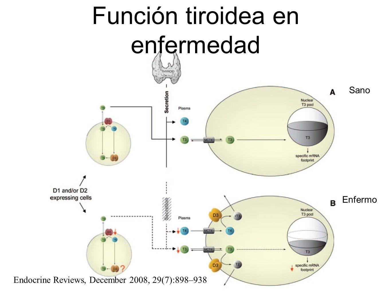 Función tiroidea en enfermedad