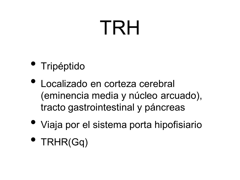 TRH Tripéptido. Localizado en corteza cerebral (eminencia media y núcleo arcuado), tracto gastrointestinal y páncreas.