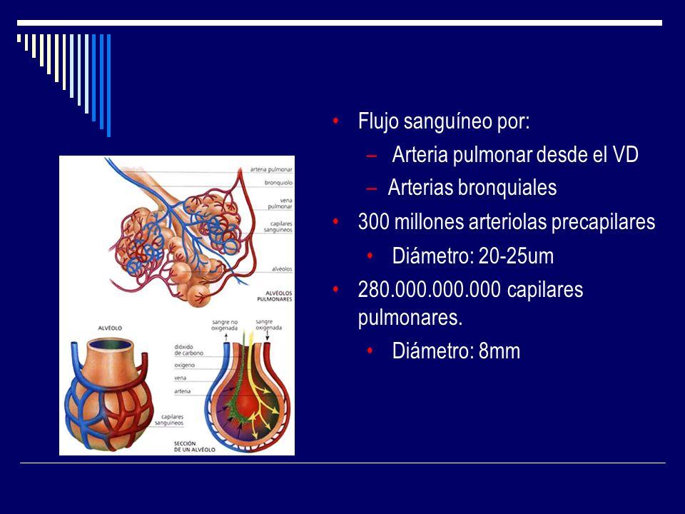 Flujo sanguíneo por:Arteria pulmonar desde el VD. Arterias bronquiales. 300 millones arteriolas precapilares.