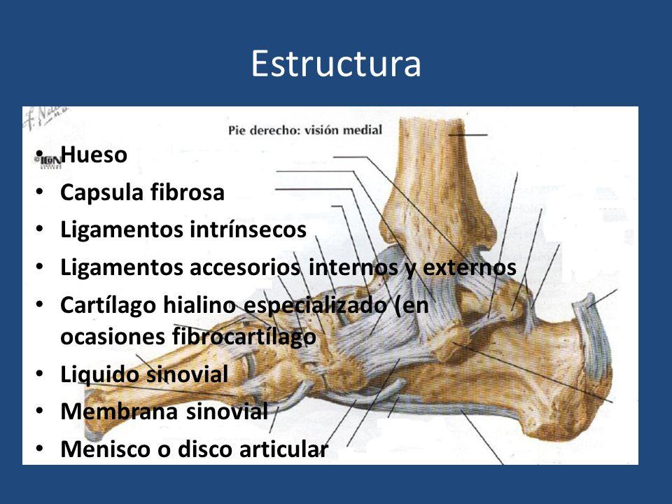 Estructura Hueso Capsula fibrosa Ligamentos intrínsecos