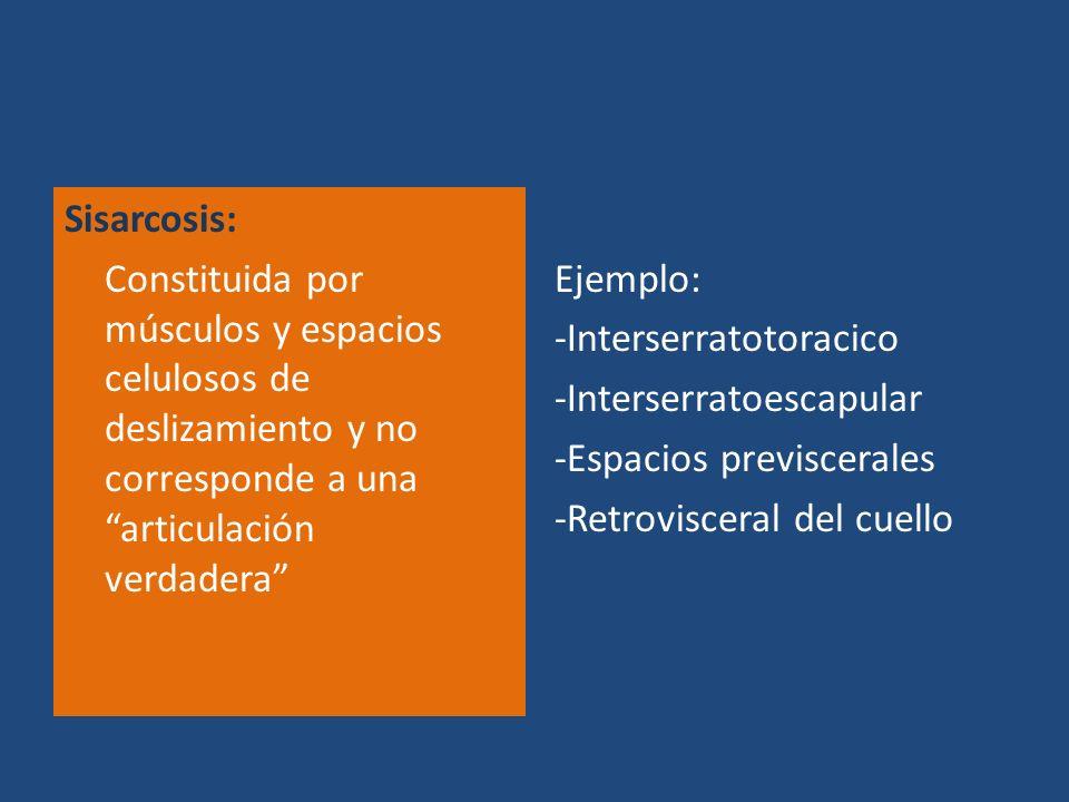 Sisarcosis: Constituida por músculos y espacios celulosos de deslizamiento y no corresponde a una articulación verdadera