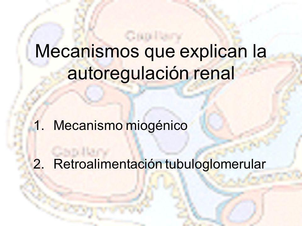 Mecanismos que explican la autoregulación renal
