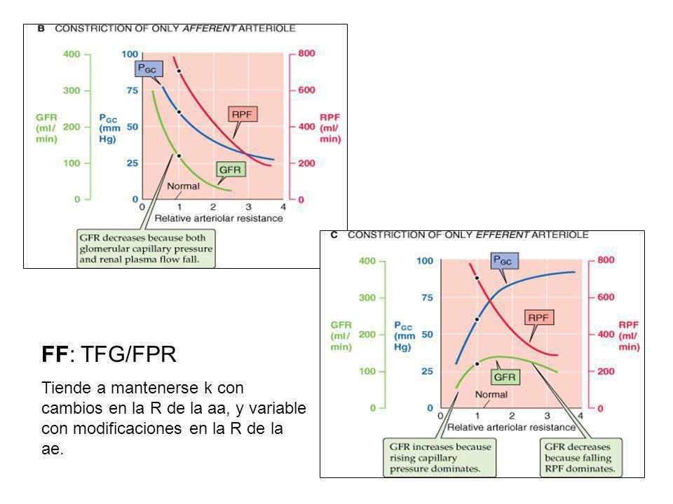 FF: TFG/FPR Tiende a mantenerse k con cambios en la R de la aa, y variable con modificaciones en la R de la ae.