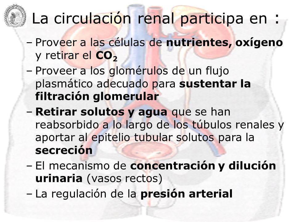 La circulación renal participa en :