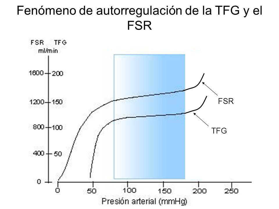 Fenómeno de autorregulación de la TFG y el FSR