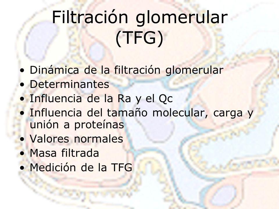 Filtración glomerular (TFG)