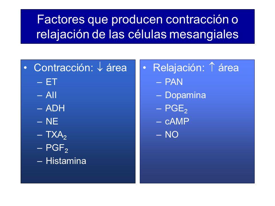 Factores que producen contracción o relajación de las células mesangiales