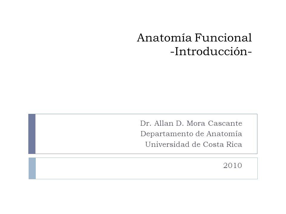 Anatomía Funcional -Introducción-