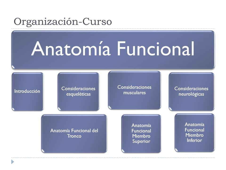 Organización-Curso Anatomía Funcional Introducción