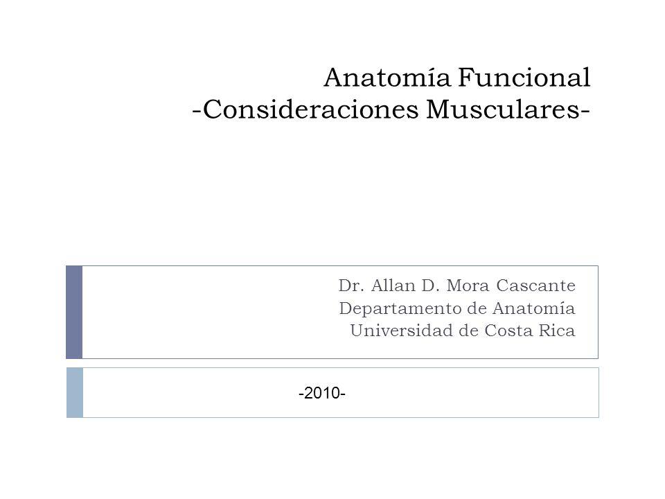 Anatomía Funcional -Consideraciones Musculares-