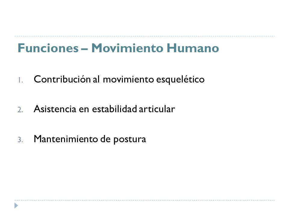 Funciones – Movimiento Humano