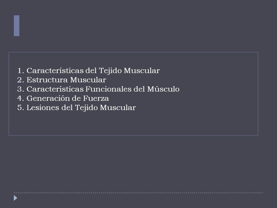 1. Características del Tejido Muscular 2. Estructura Muscular 3
