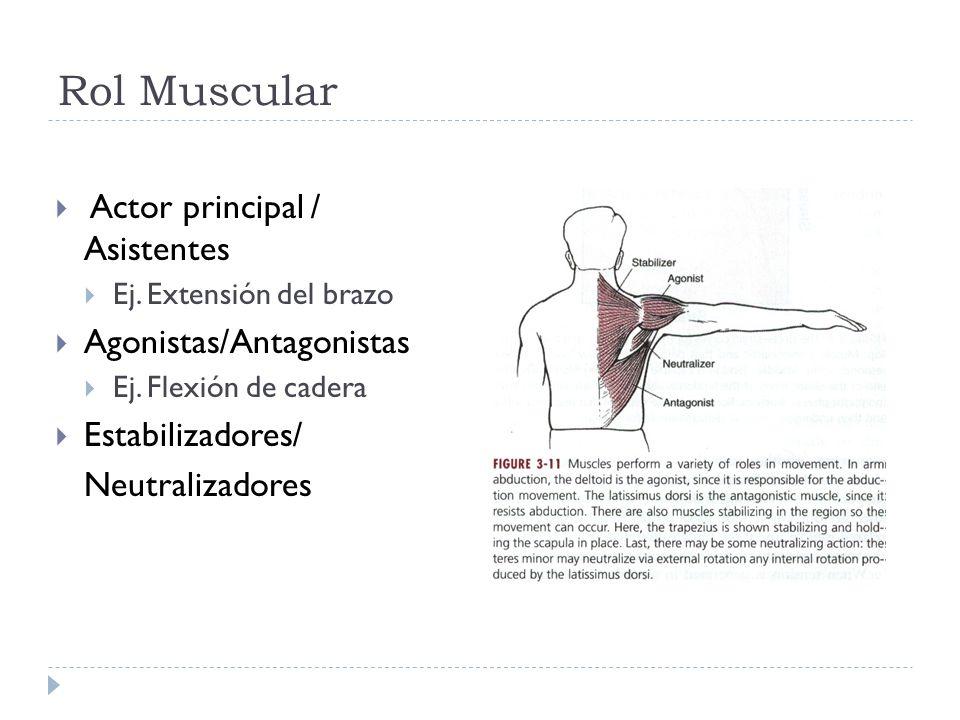 Rol Muscular Actor principal / Asistentes Agonistas/Antagonistas