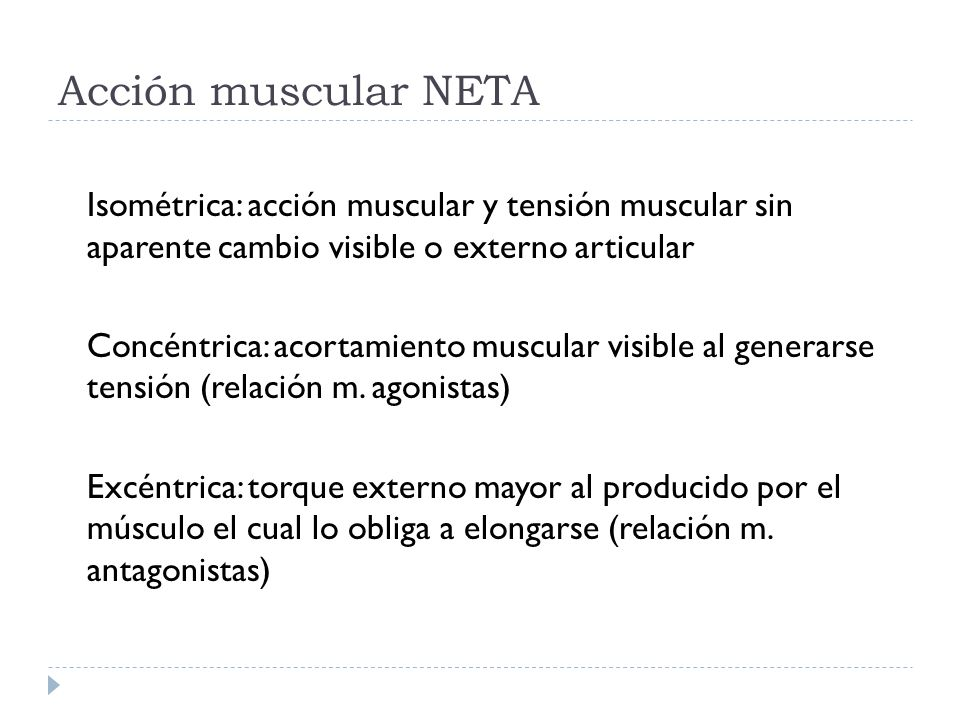 Acción muscular NETA