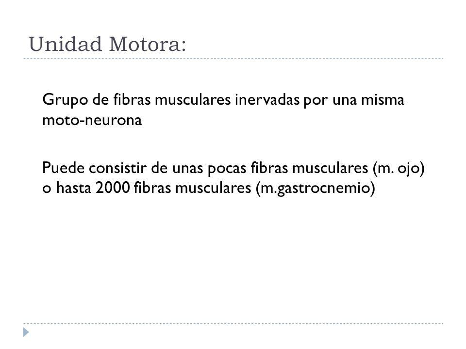 Unidad Motora: