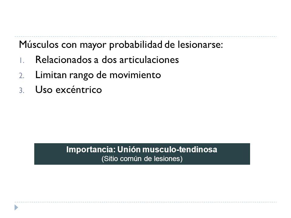 Importancia: Unión musculo-tendinosa