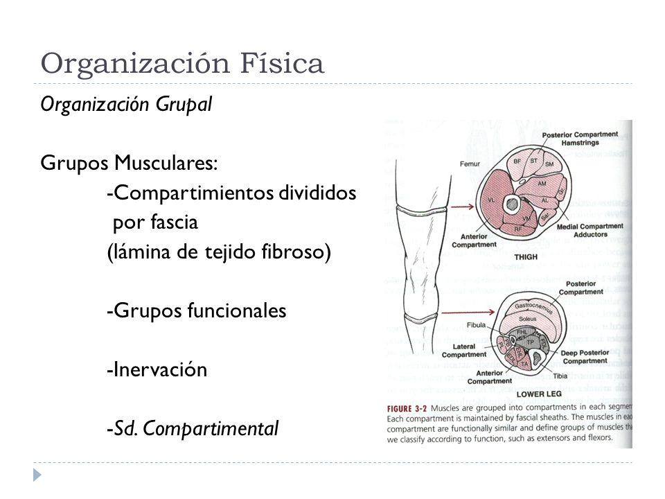 Organización Física