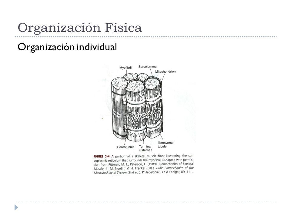 Organización Física Organización individual