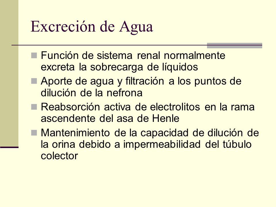 Excreción de Agua Función de sistema renal normalmente excreta la sobrecarga de líquidos.
