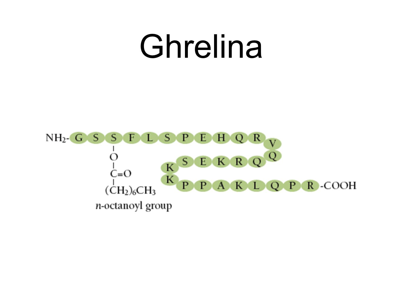 Ghrelina
