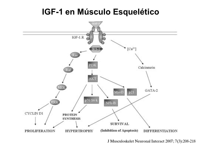 IGF-1 en Músculo Esquelético