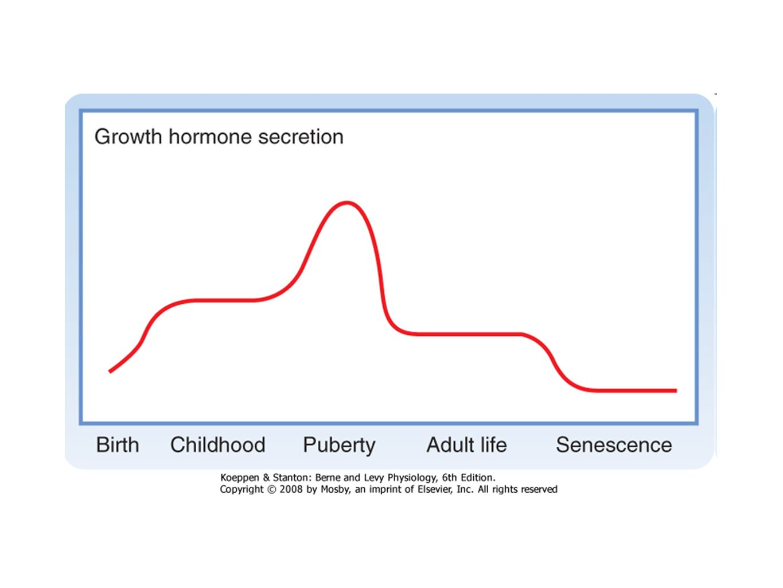 Lifetime pattern of GH secretion