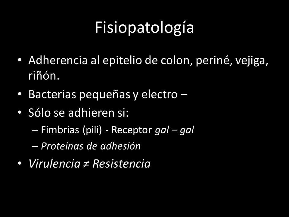 Fisiopatología Adherencia al epitelio de colon, periné, vejiga, riñón.