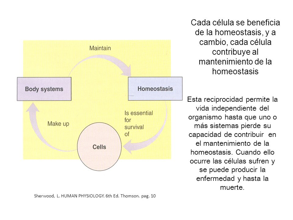 Cada célula se beneficia de la homeostasis, y a cambio, cada célula contribuye al mantenimiento de la homeostasis