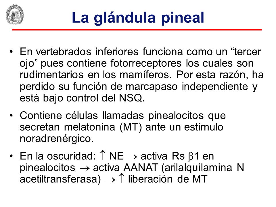 La glándula pineal