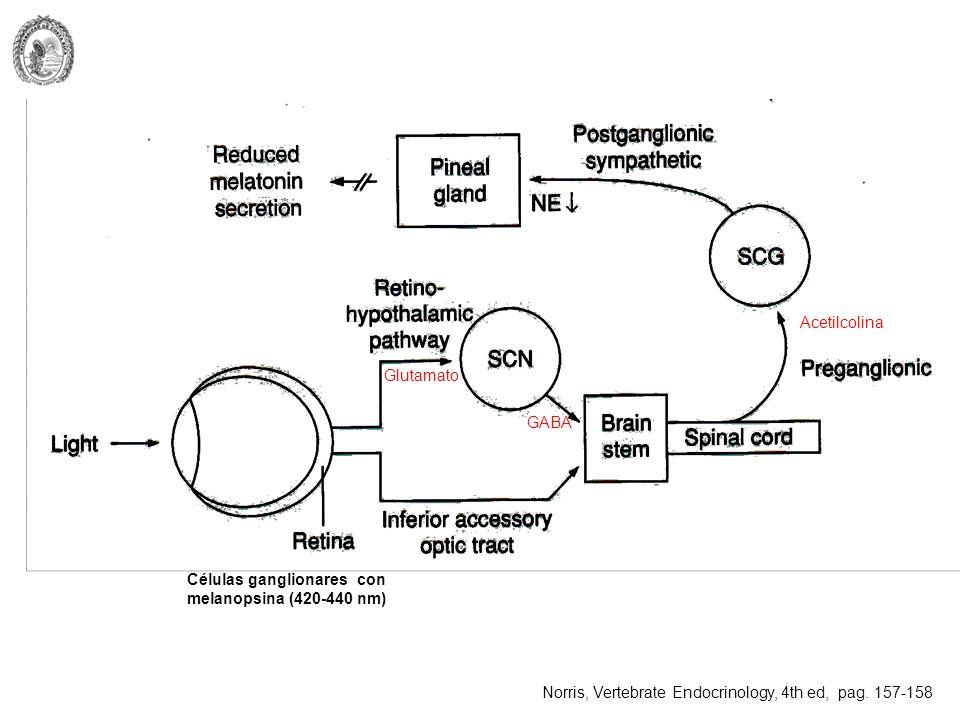 Células ganglionares con melanopsina (420-440 nm)
