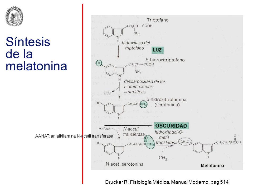 Síntesis de la melatonina