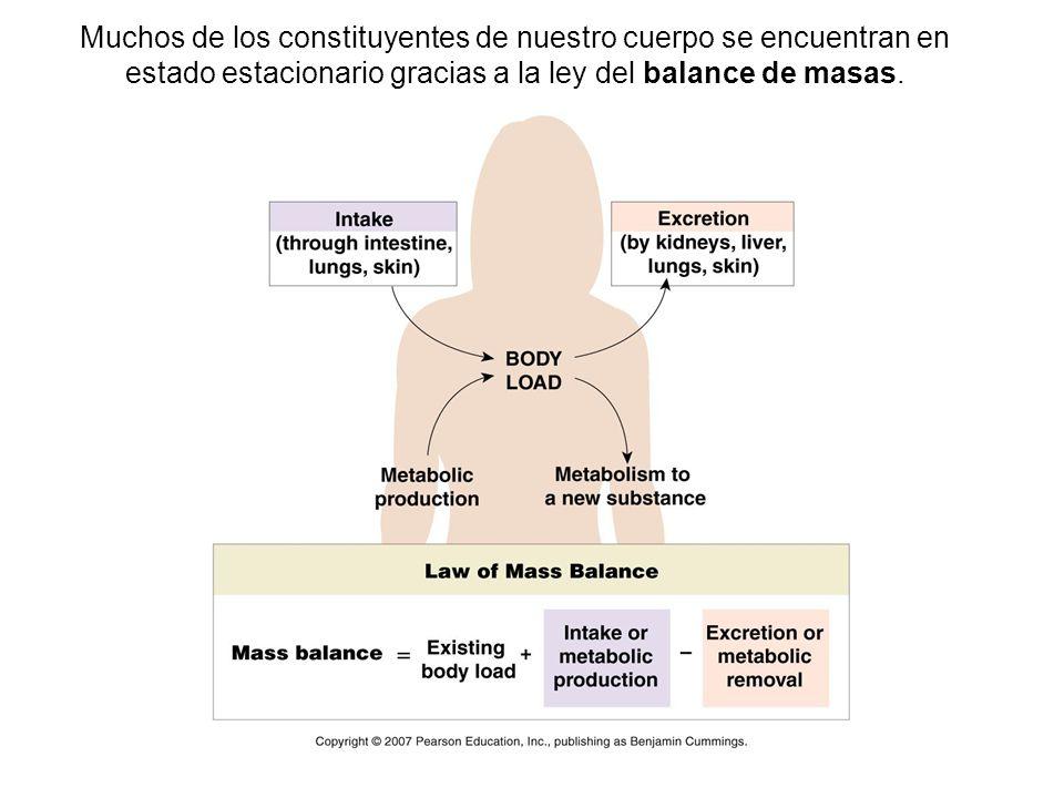 Muchos de los constituyentes de nuestro cuerpo se encuentran en estado estacionario gracias a la ley del balance de masas.