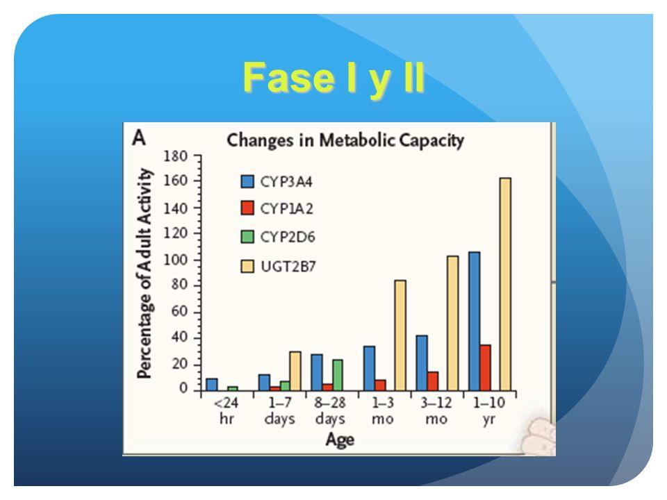 Fase I y II Los estudios in vitro muestran que la madurez en ambos sistemas se alcanza hasta los dos meses.(oxidación-reducción y conjugación)
