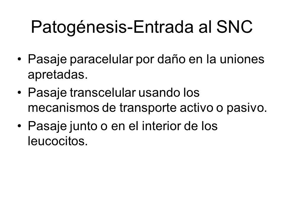 Patogénesis-Entrada al SNC