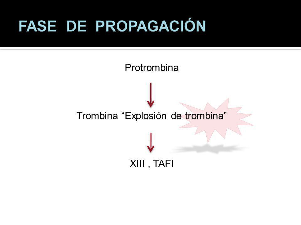 Protrombina Trombina Explosión de trombina XIII , TAFI