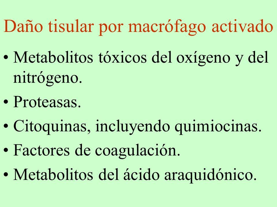 Daño tisular por macrófago activado