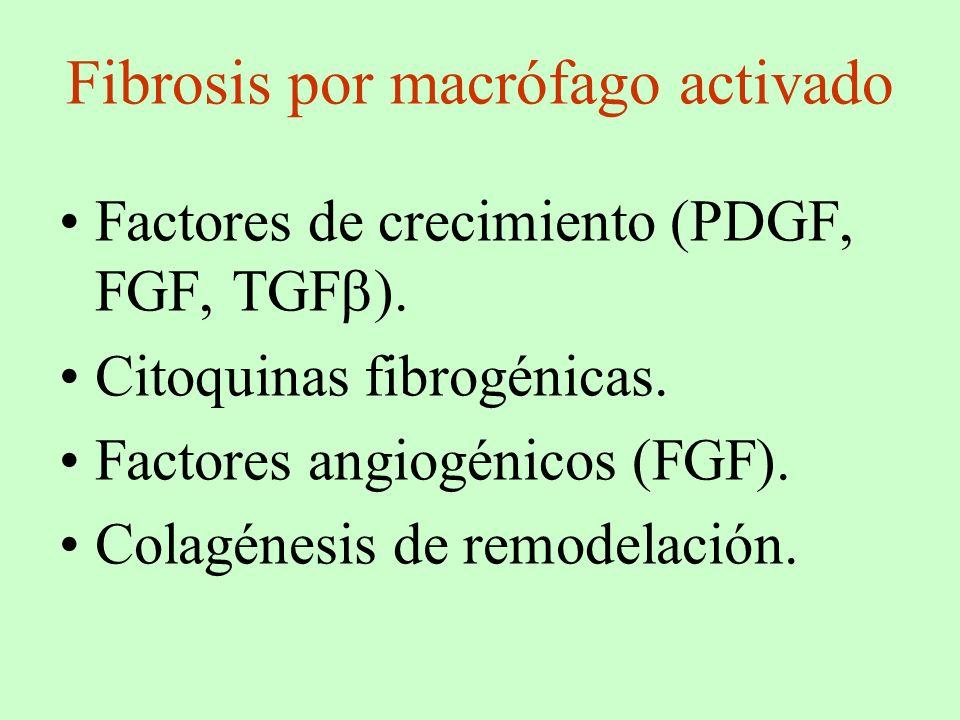 Fibrosis por macrófago activado