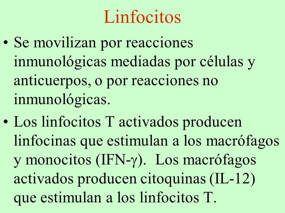 Linfocitos Se movilizan por reacciones inmunológicas mediadas por células y anticuerpos, o por reacciones no inmunológicas.