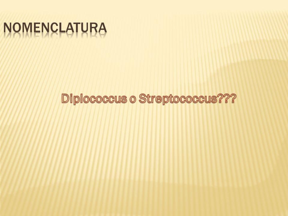 Diplococcus o Streptococcus