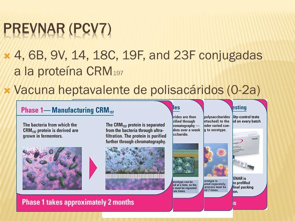 Prevnar (PCV7) 4, 6B, 9V, 14, 18C, 19F, and 23F conjugadas a la proteína CRM197. Vacuna heptavalente de polisacáridos (0-2a)