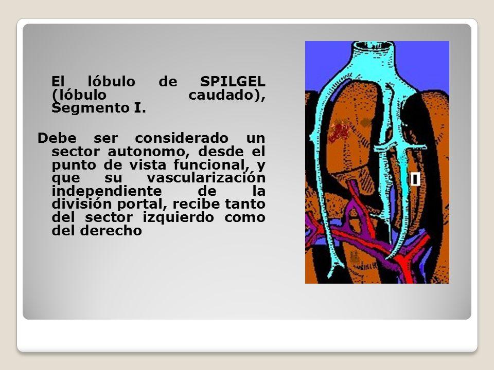 El lóbulo de SPILGEL (lóbulo caudado), Segmento I.