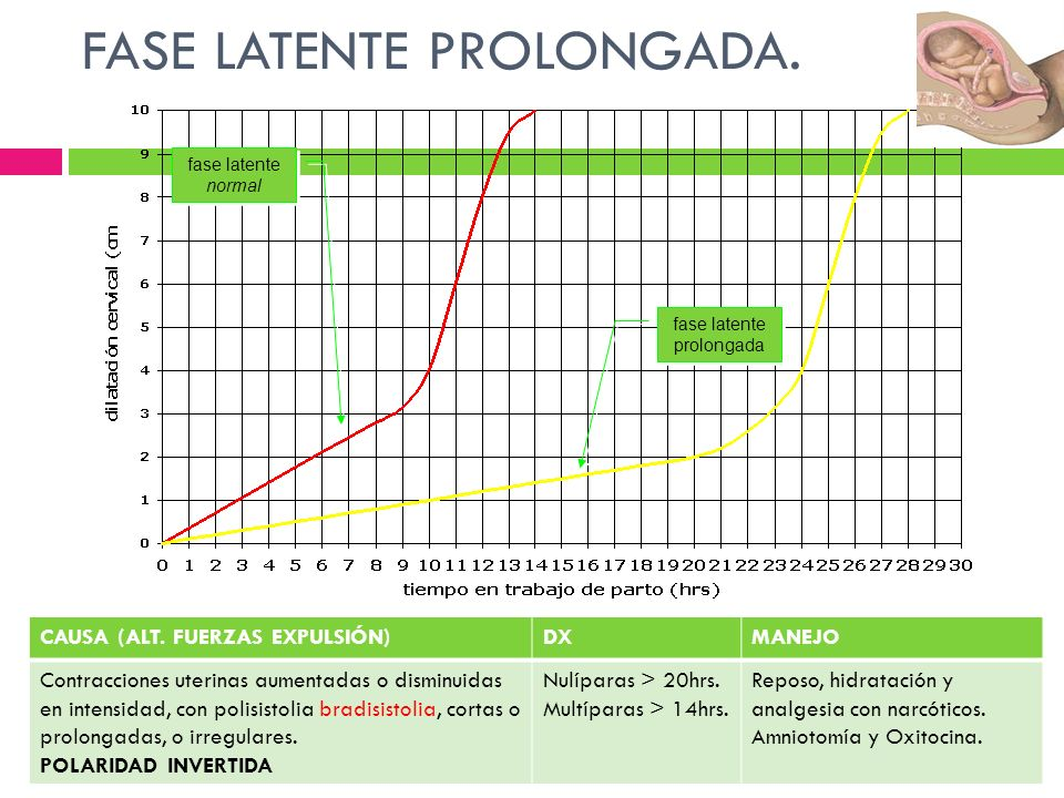 FASE LATENTE PROLONGADA.