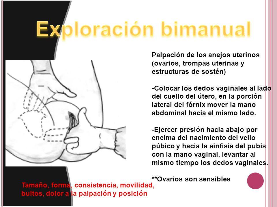Exploración bimanual Palpación de los anejos uterinos (ovarios, trompas uterinas y estructuras de sostén)