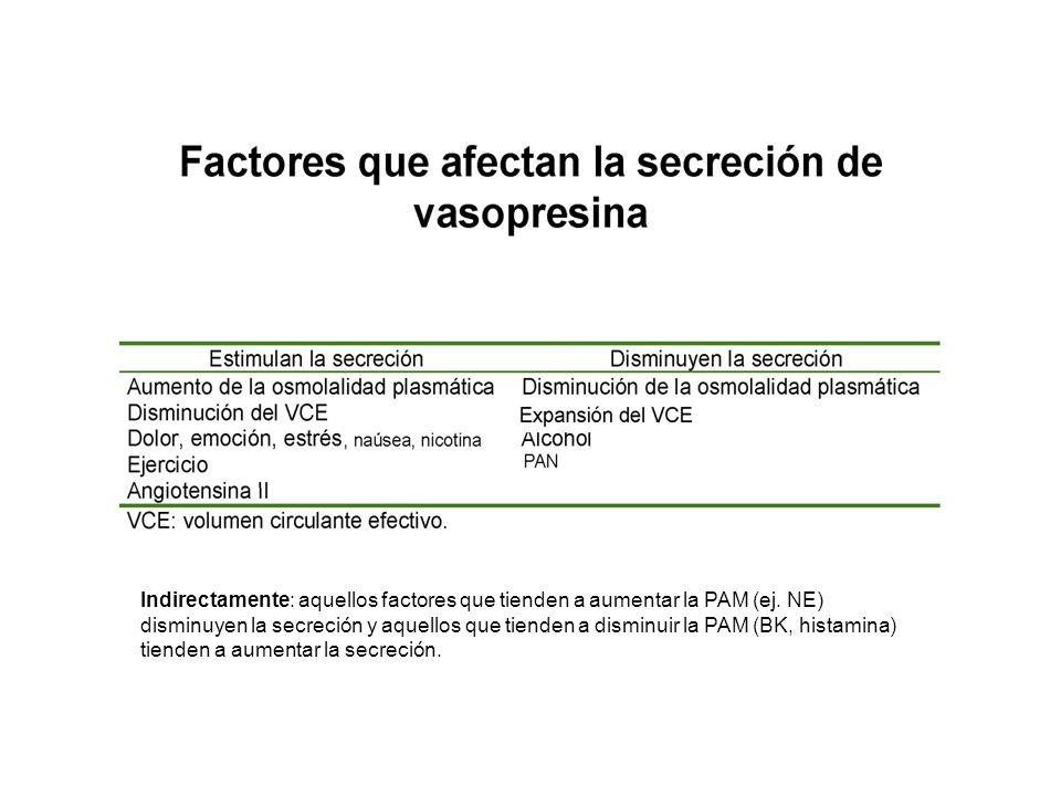 Indirectamente: aquellos factores que tienden a aumentar la PAM (ej