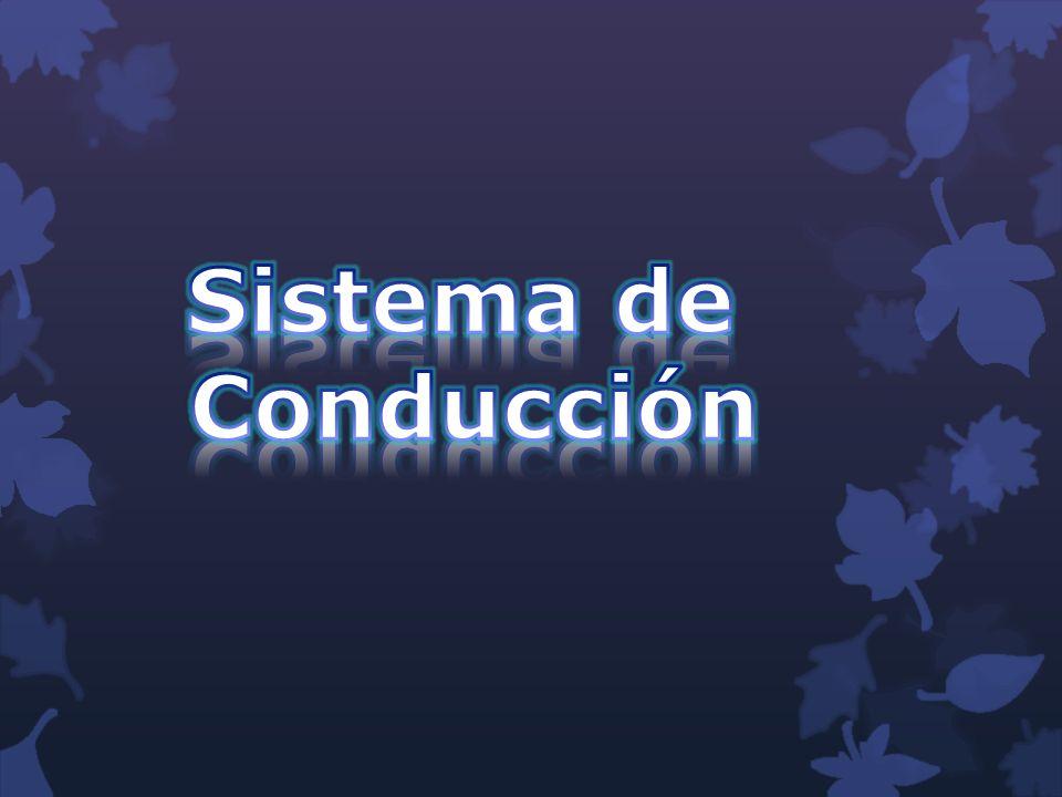 Sistema de Conducción